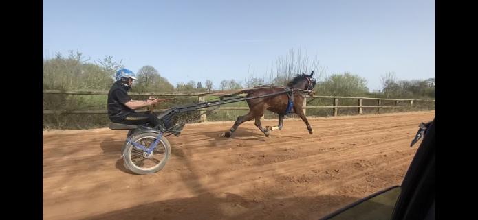 Pre-entrainement---debourrage--chevaux-a-ressayer