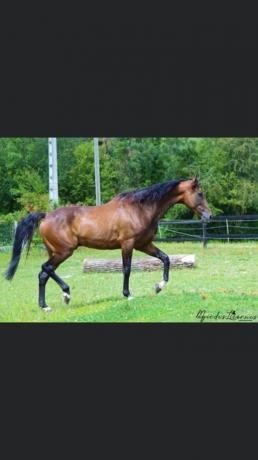 Prend-chevaux-au-pre-entrainement--pension-