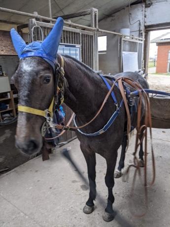Entraineur-cherche-chevaux-pour-debourage-et-location