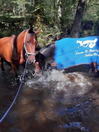 Recherche-cheval-amateur
