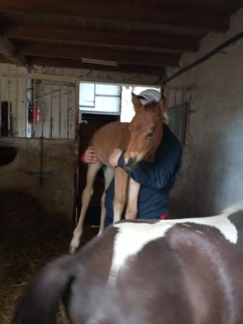 Urgent-Recherche-exploitation-equestre-herbagere