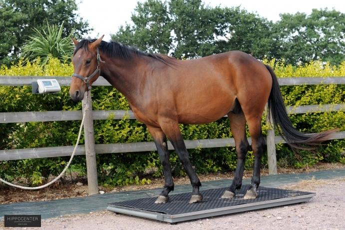 Balance-pour-chevaux--HIPPOCENTER
